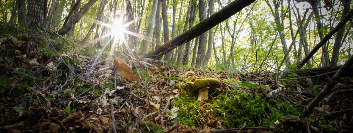 Il bosco ed il suo Re